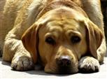 Hunde-Persönlichkeit