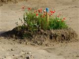 Blumeninsel im Erschließungsmeer
