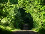 Waldwegtunnel