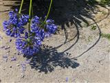 florale Verbeugung