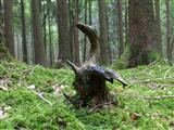 Wurzelschwan