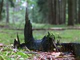 Ulmer Münster im Wald