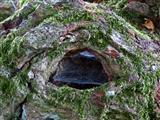 Baum-Schlafauge