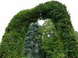 Eingang zum Paradies - Buchenheckentorbogen
