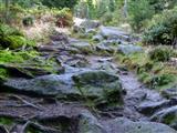 Fichtelgebirge Weg zum Nußhardt