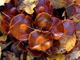 Pilzkolonie im Herbstwald
