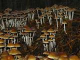 Pilzkolonie am Bahndamm