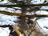Biberwaldweg