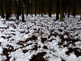 Wildschwein-Eicheln-Futterplatz im Winter
