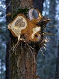 mir ist kalt - geschnittener Baum am alten Kanal