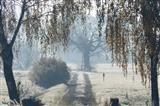 zauberhafter Frostnebelmorgen