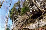 Extremer Baumstandort über dem Jakobsweg in der Schweiz