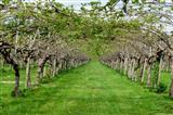 die große Unbekannte-Kiwiplantage in der Schweiz