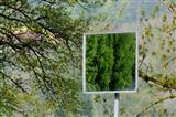 Wald im Spiegel