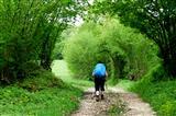 Wunderschönes Baumtor am Jakobsweg in Frankreich