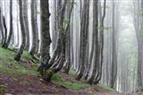 Abstieg von den Pyrenäen