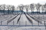 Triesdorf Pomoretum im Winterschlaf