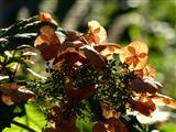im Herbstgarten
