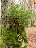 Stamm-Baum