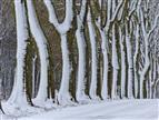 Triesdorf - Platanenallee im Schnee