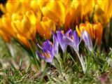 leuchtende Frühlingsfarben