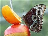Wilhelma Stuttgart Schmetterling beim Naschen