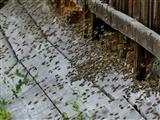 Bienenflugverkehr