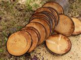 10 kg Holzaufschnitt