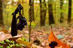 Skulptur am Waldboden
