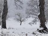 Triesdorfer Schneelandschft