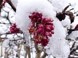 eingefrorene Blütenpracht