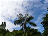 Botanischer Garten Erlangen Palme