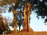 Sturmgespaltende und abgedrehte alte Linde bei Triesdorf