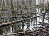 Biberwald bei Kleinbreitenbronn