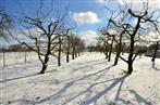 Kirschengarten im Schnee