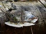 Baumpilz mit Naturschmuck