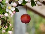 Ostern 2019 Apfel und Blüte an einem Bäumchen