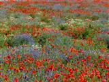 Wunderschönes Blütenmeer