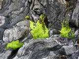 Grün und Grau