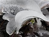 Eisdelfin