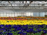 Haus des Frühlings