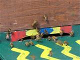 Bienenflugwetter
