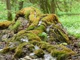 steinerne Rinne bei Wolfsbronn