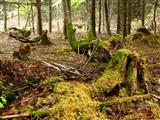 ein Bild aus dem Wald