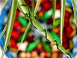 Zimmerpflanzenschlange