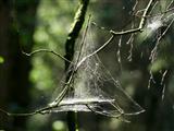 ein hängendes Spinnenzelt