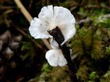 Pilz wie eine Blume