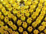 Sonnenblumenblümchen