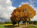 Sonne bringt Leben in die Natur