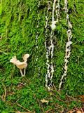Pilz am Harzwasserfall